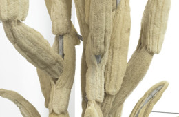 oren-pinhassi-detail-cactus-tree-2017-steel-cement-burlap-egyptian-loofah-155x165x247cm-jpg