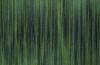 luca-macauda-testa-di-pisma-2017-pastello-morbido-acrilico-su-tela-cm-135x135-copia