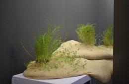 Noemi Mirata, Proliferazione (particolare), 2021, installazione ambientale, tessuto traspirante, ghiaia, semi di lenticchie e struttura metallica, 400x156x30 cm